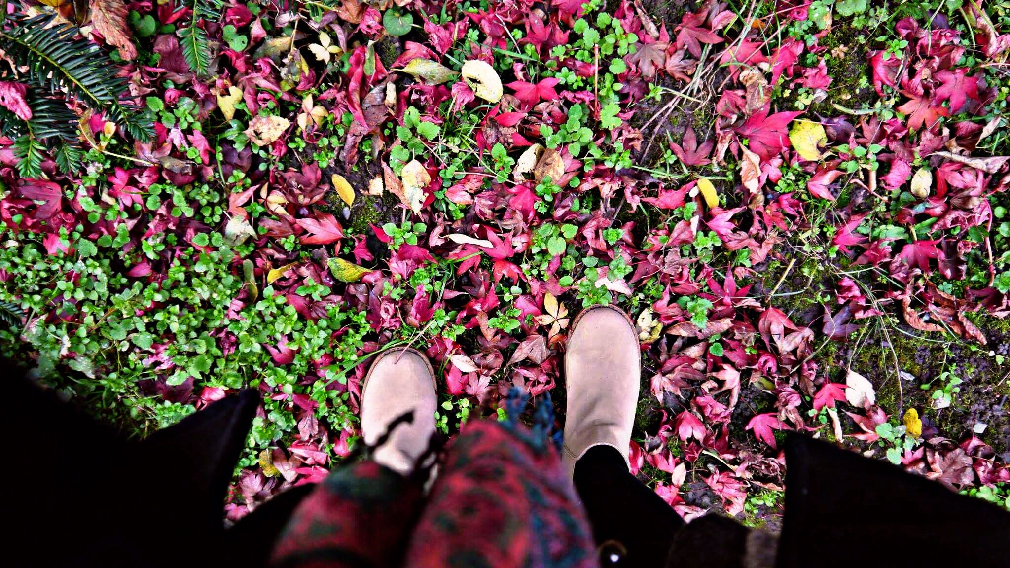 Mother nature has the best box of crayons #love #autumn