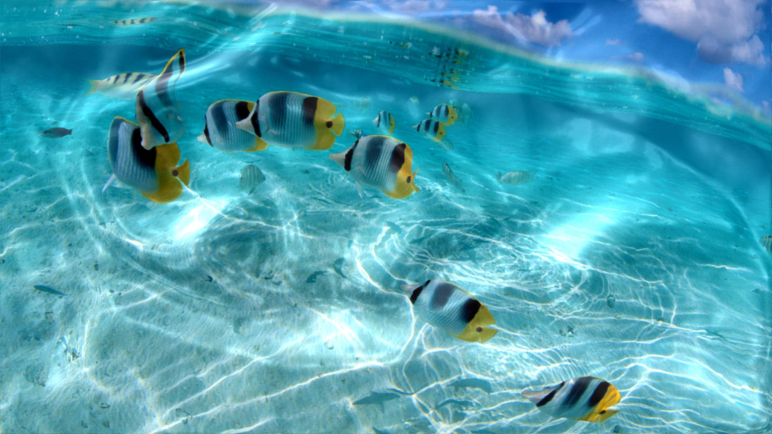 Watery Desktop Animated Wallpaper Amuzament Live Wallpaper For