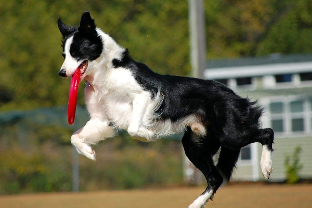 Check Out Today S Smart Dog Fact Http Pawsforreaction Blogspot