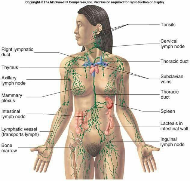 NHL map | HEALTH & HEALING | Pinterest | Alternative health