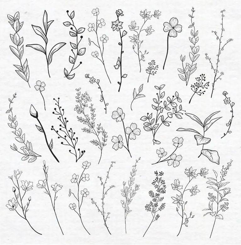 Vector Drawn Herbs, Plants, Flowers Vector Illustration EPS -   14 plants Drawing tattoo ideas