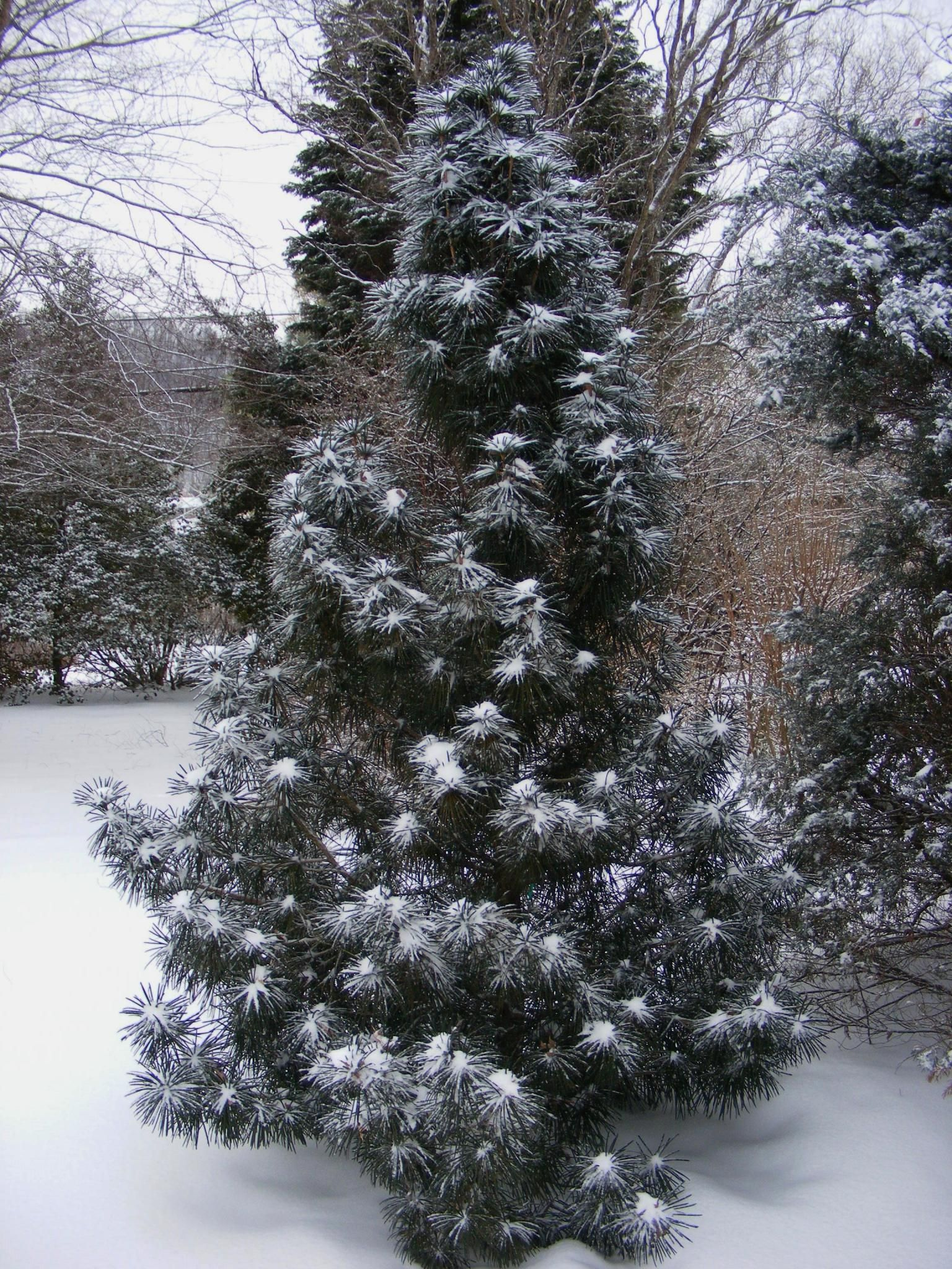 a dusting of snow in jeff u0027s tennessee garden fine gardening