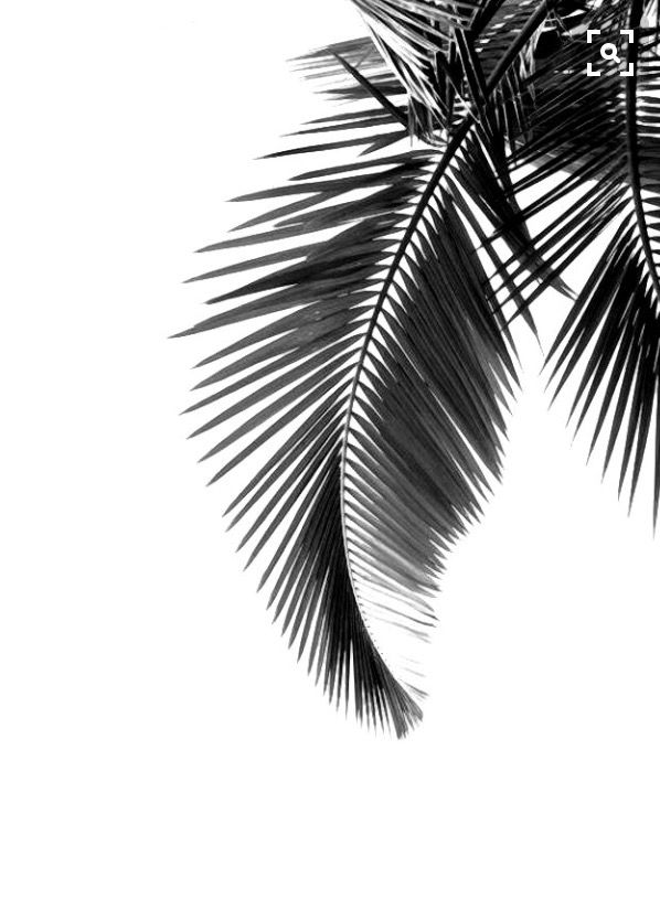 Palmtree summer black white holiday ready sun