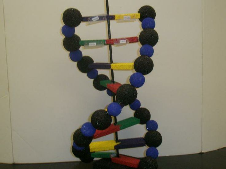 dna double helix model project ideas - Google Search ...