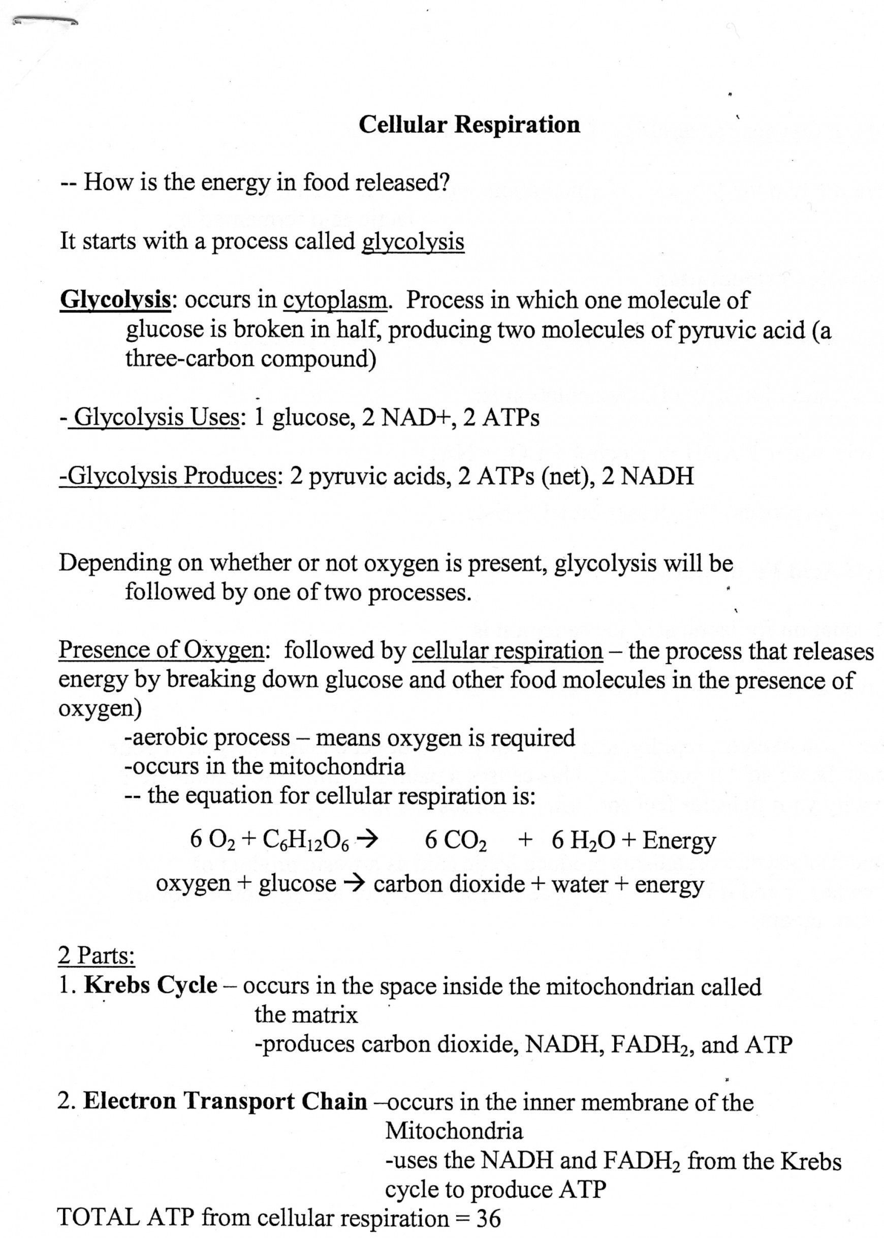 Cellular Transport Worksheet Answer Key Cellular Transport