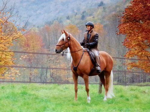 HorseID: 2071542 Cbuscuit.com - PhotoID: 836197