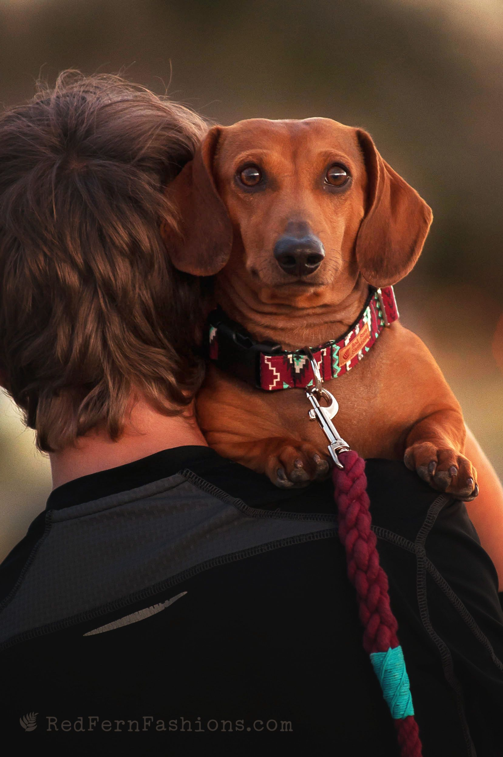 Photo Of A Dachshund With Fabric Collar And Hand Dyed Rope Leash