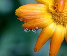 8 liečiv priamo zo záhradky | Poctivé Potraviny