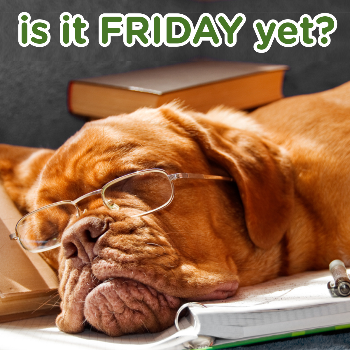 It's finally Friday! Smartest dogs, Senior pet care, Dogs