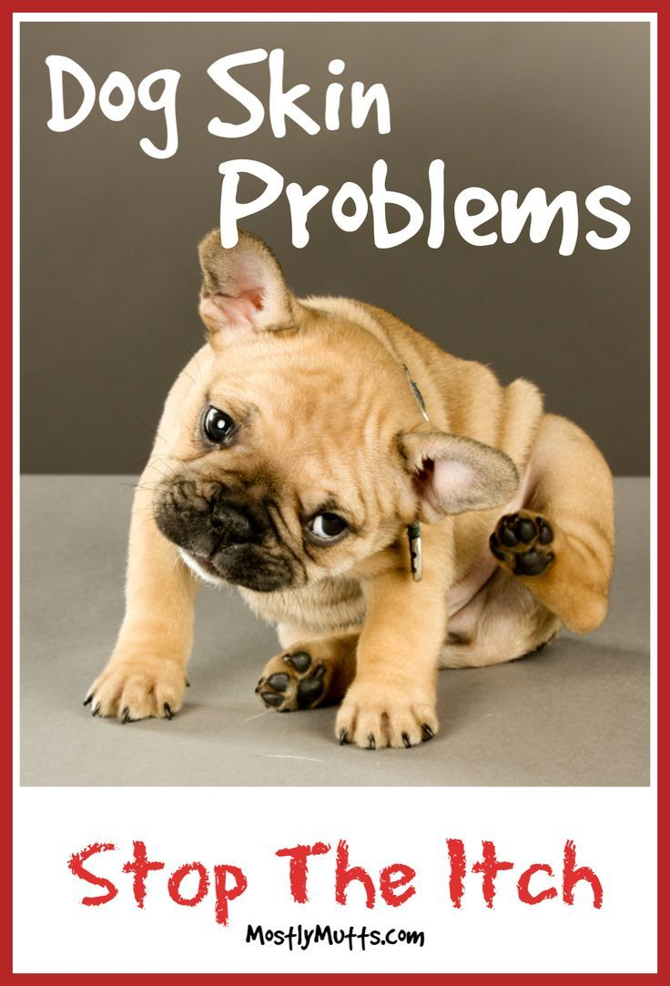 Common dog skin problems and how to help them itchy dog