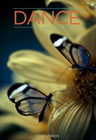Dance. #butterfly #photography | http://www.nancyfalconi.com/