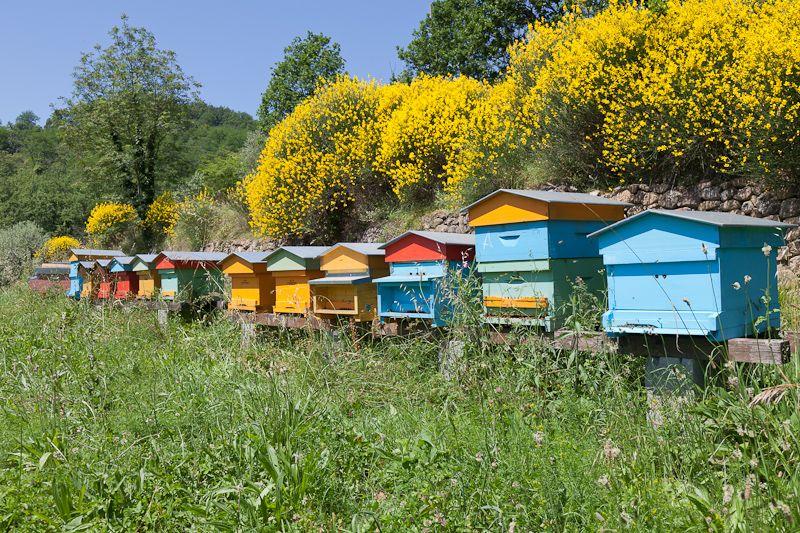 Lunigiana and Its Wonderful Honey Trip advisor, Italy