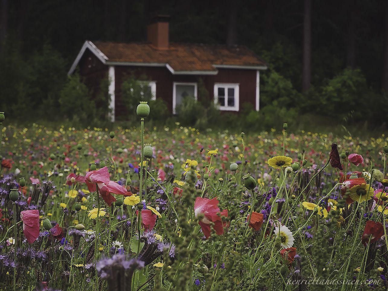 Suomi100 kukkaketo