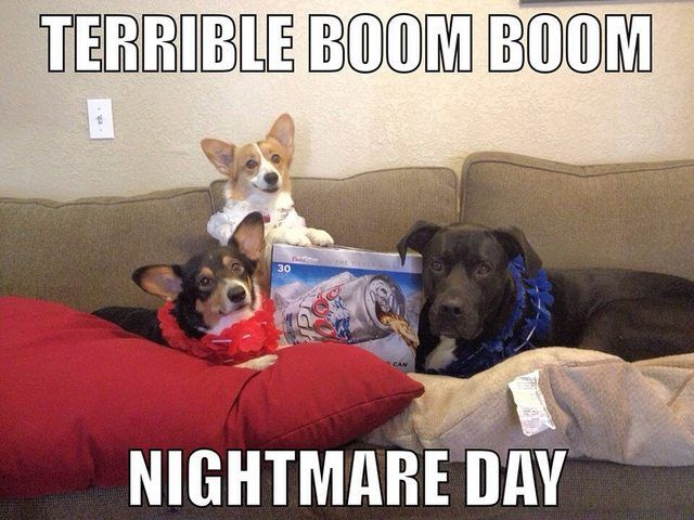 Repost From Last Year Happy 4th Of July To My Fellow Dog Owners Dog Memes Funny Memes Funny Pictures With Captions