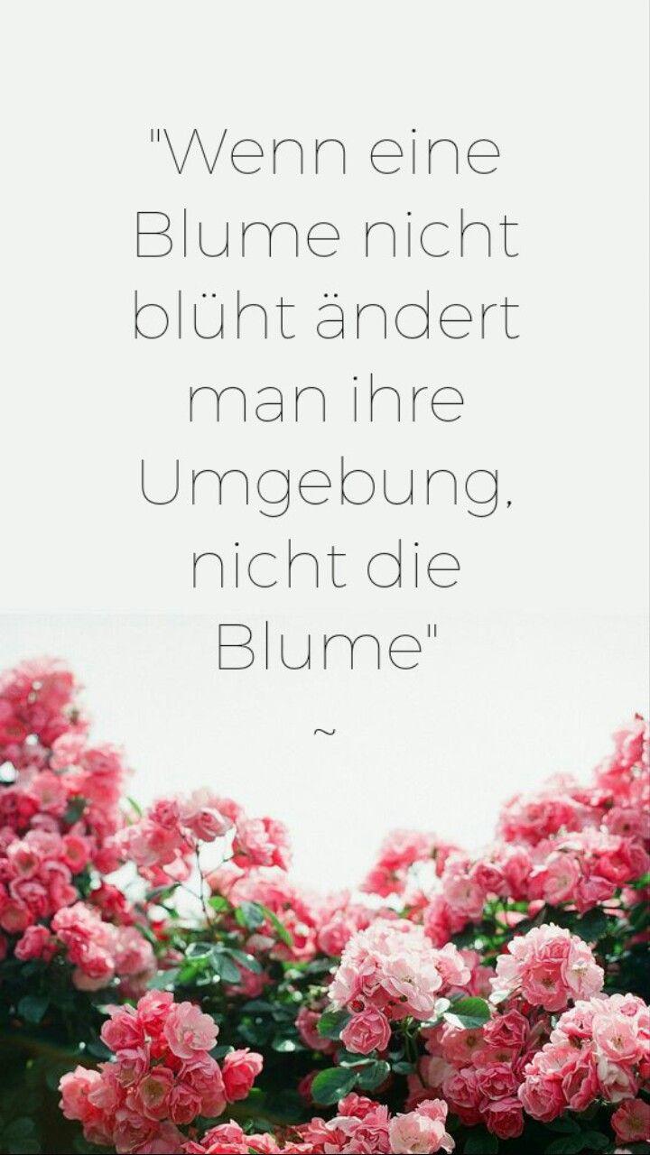 sprüche über blumen Wenn eine Blume nicht blüht ändert man die Umgebung, nicht die  sprüche über blumen