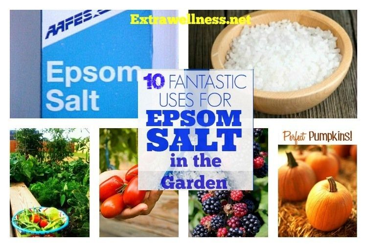 Top 10 Important Gardening Tips And Uses For Epsom Salt