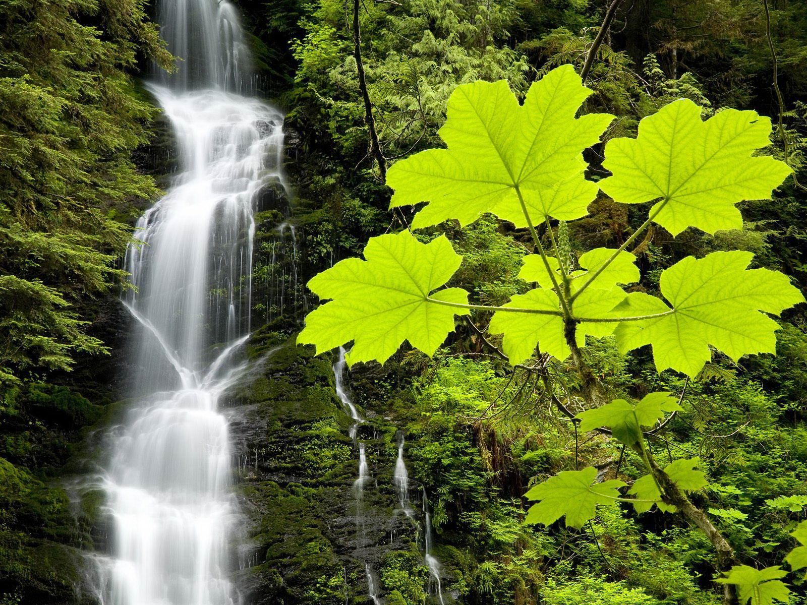 Leaves & water fall Waterfall, Waterfall wallpaper