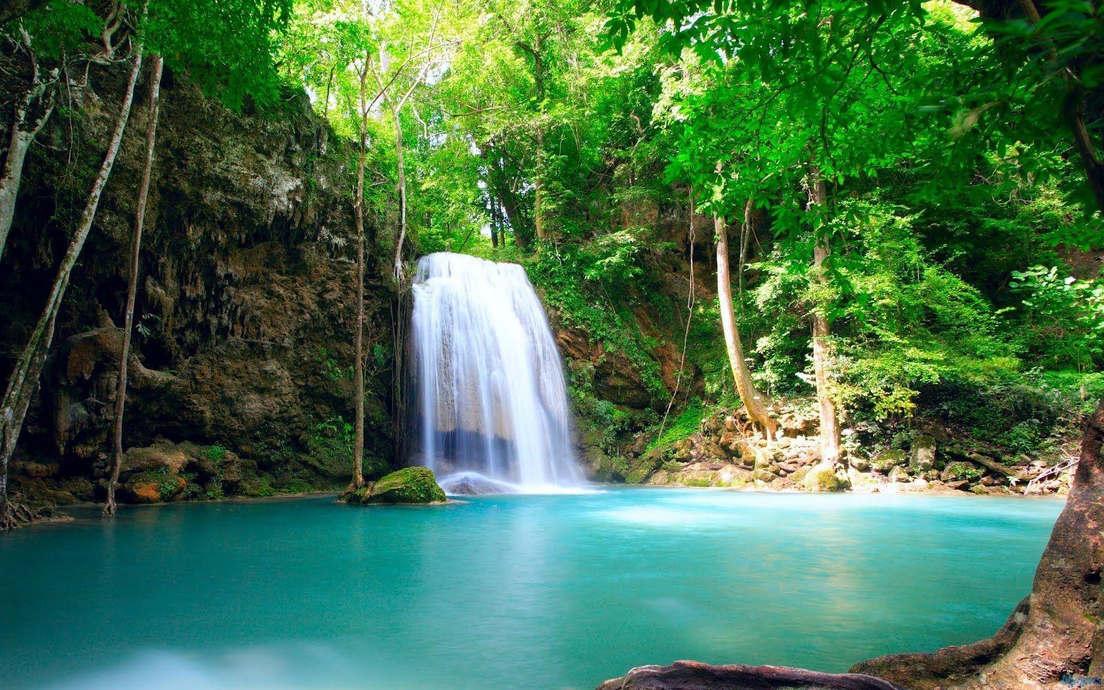 Tropical Rainforest Waterfalls Hd Wallpapers 1600 1000 Pixel