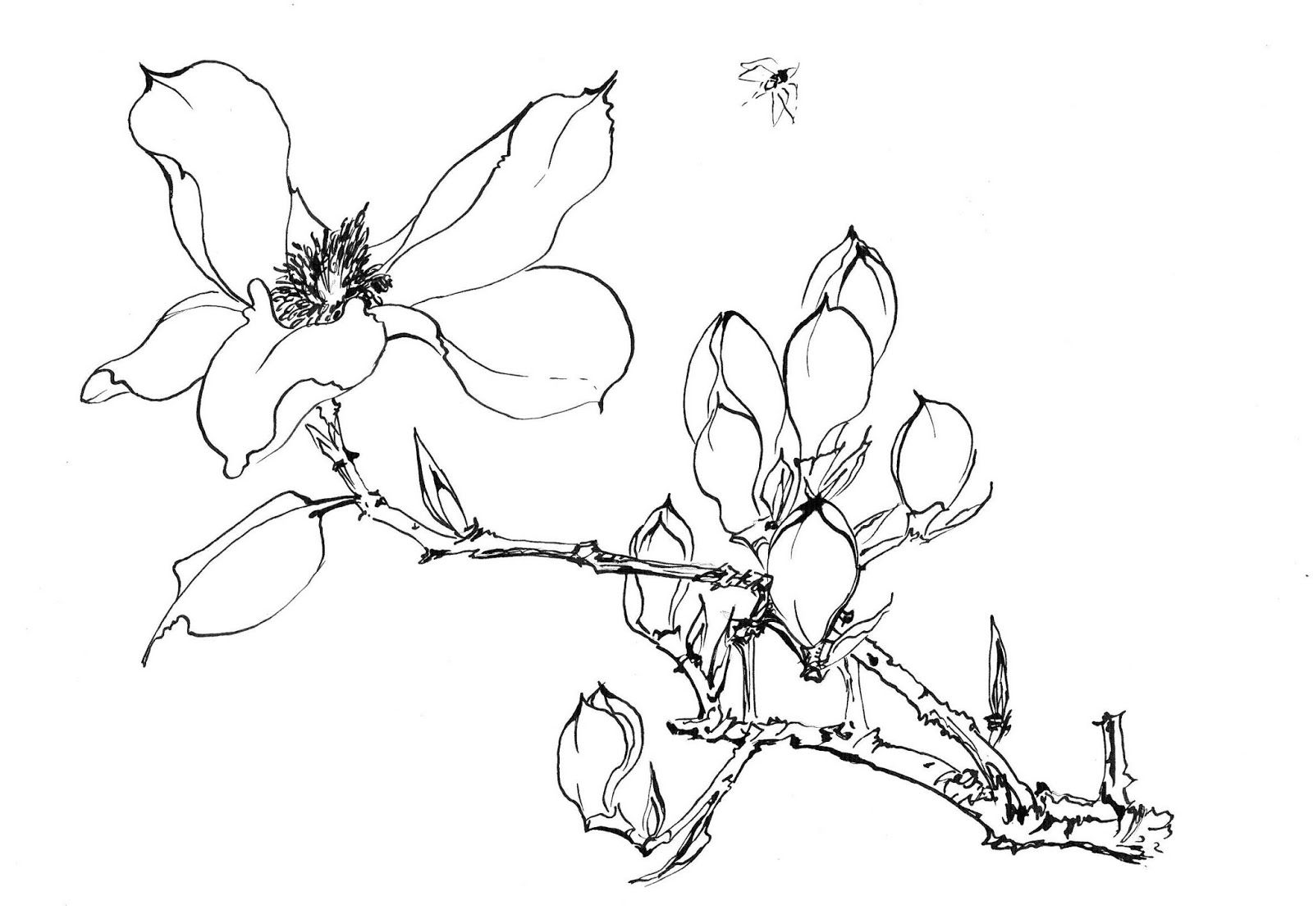 распускающийся цветок картинки карандашом являются