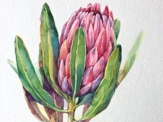 Protea flower ORIGINAL watercolor still life botanical by narteck