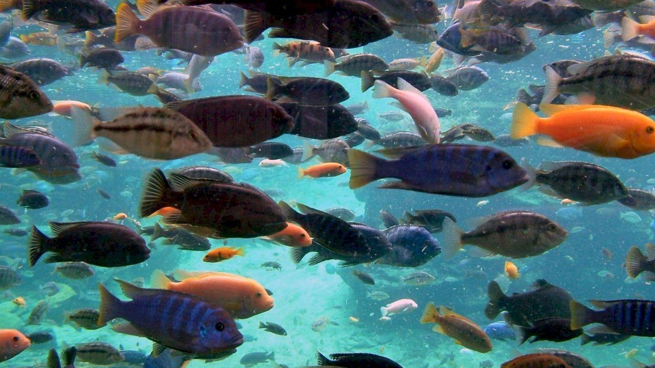 تفسير السمك في المنام Ocean Wallpaper Underwater Ocean
