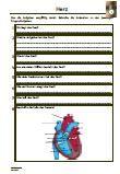 Herz Verschiedene Fragen zu dem Thema: Herz, Aufgaben, Klassenarbeit, Lernzielkontrolle, Schularbeit, PDF, Bestandteile, Herzkammern, Herzmuskel, Taschenklappen, Segelklappen, Herzscheidewand, Systole, Diastole, Herzschlag, Arbeitsphasen, Herzkreislauf, Blutdruck, Aorta, Herzfrequenz, Ruhepuls, Herzinfarkt, EKG, Herzrhythmusstörung, Bluthochdruck, Schlaganfall  Die Arbeitsblätter sind eine optimale Vorbereitung für eine Klassenarbeit / Schulprobe / Schularbeit.