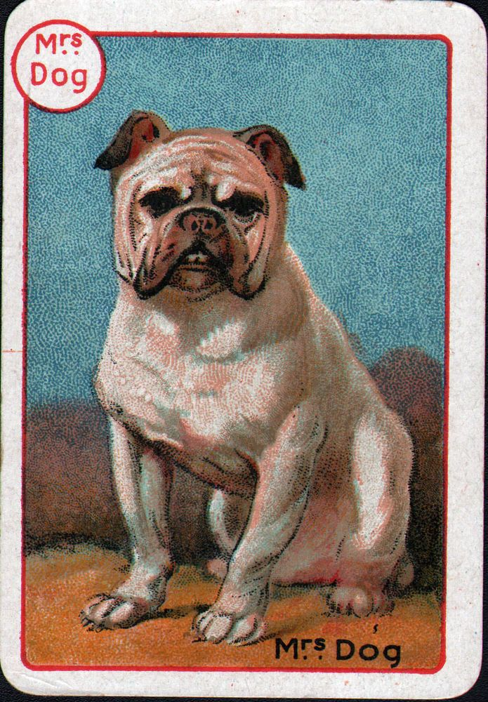 Pin On Mostly Vintage Bulldog Pictures And Postcards 1
