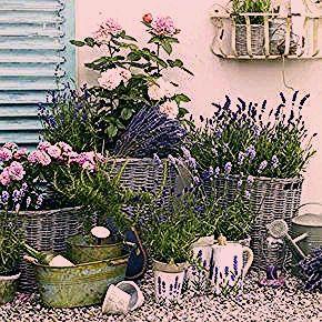 Photo of Vive la France: Deko im Provence-Stil