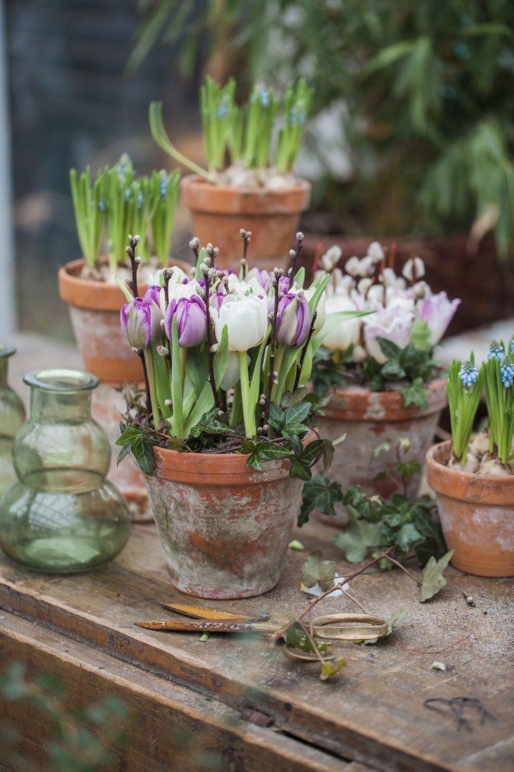 Tulpen in einem Terrakottatopf Weidenkätzchen und Efeu #flowerlovers #flowerpower