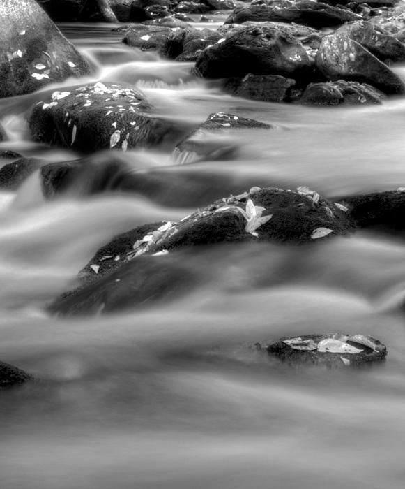 Fall On The River In Black And White