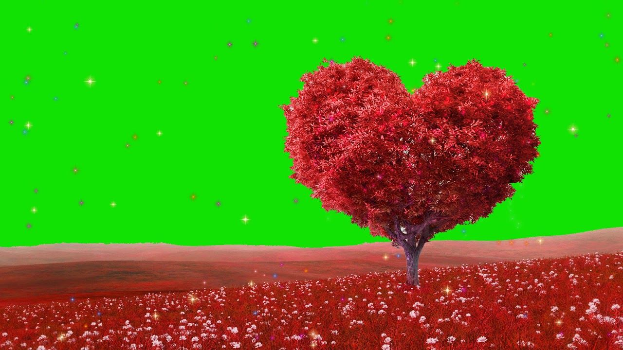 Background Video Effects Hd Free Download Background Effects