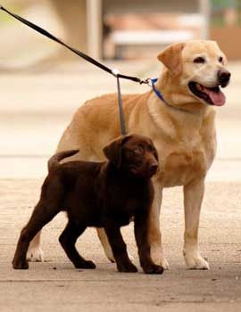 Dog Walking Business Salary
