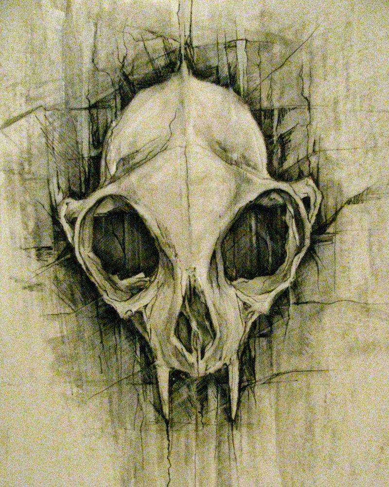 Cat Skeleton Drawing Cat Skeleton t