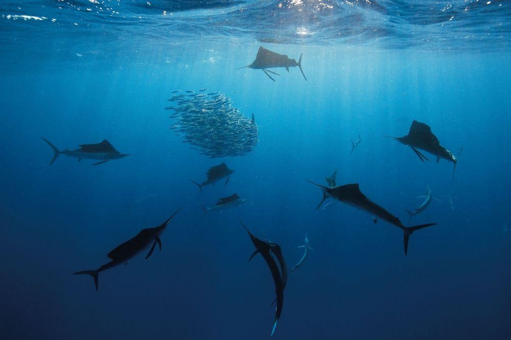 Caribbean Sea Animal Life: Dive With Giants: The Caribbean's Big Animal Encounters
