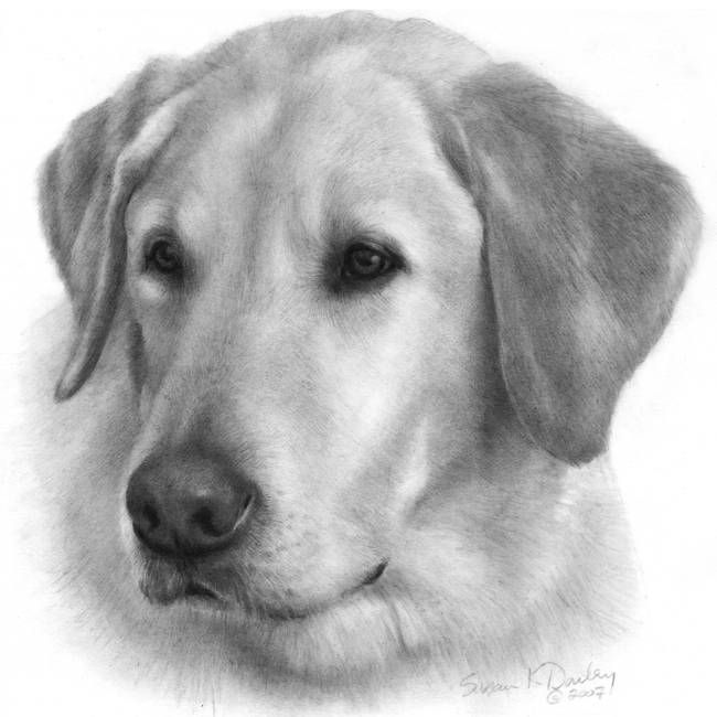 sam yellow labrador retriever by susan donley art pinterest