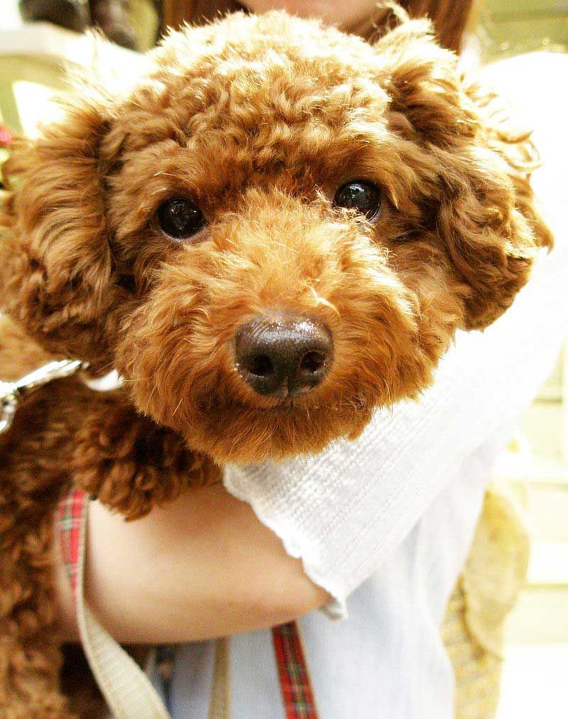 Cool Fluffy Brown Adorable Dog - 4f27875c681e86a1f64d5446e2817bbc  You Should Have_807359  .jpg
