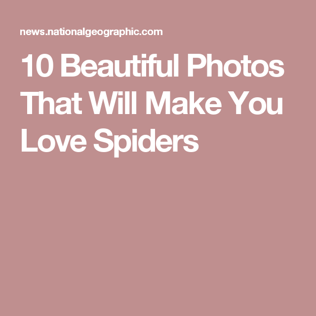 10 Beautiful Photos That Will Make You Love Spiders