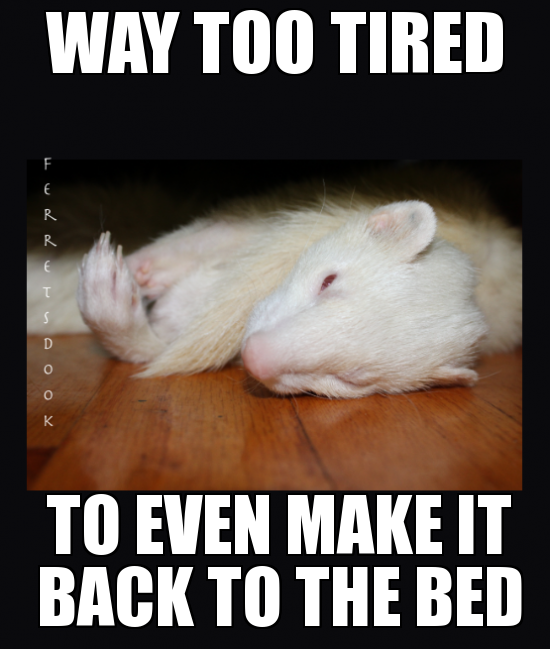 the everyday ferret WeKnowMemes Generator (With images