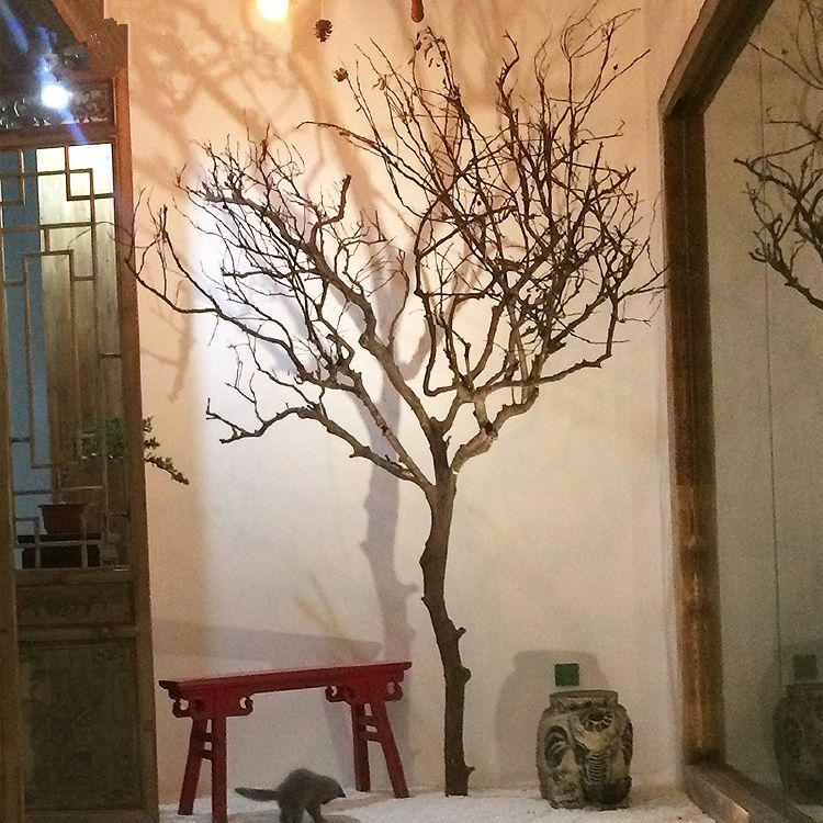 Igh Quality Of Dry Tree Branches With