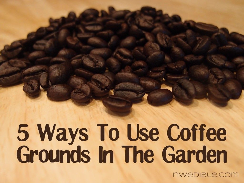 5 Ways To Use Coffee Grounds In The Garden Coffee Grounds Uses For Coffee Grounds Garden