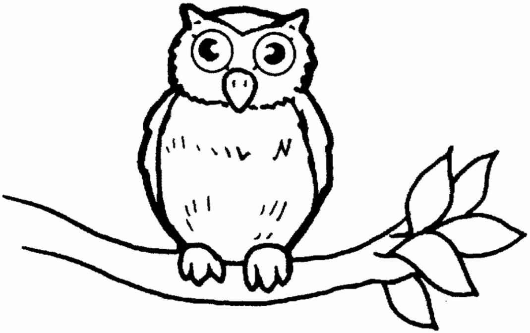 animals owl printableanimal coloring pagesprintable coloring pagescute owl - Cute Owl Coloring Pages Girls