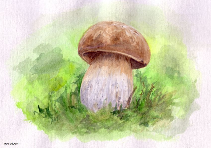 один рисуем грибы картинки электробот
