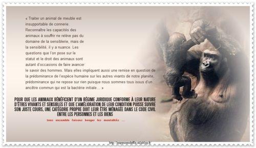 A FAIRE TOURNER - Les pensées d'Effie la petiton à retrouver en ligne ; http://www.30millionsdamis.fr/agir-pour-les-animaux/petitions/signer-petition/pour-un-nouveau-statut-juridique-de-lanimal-22.html