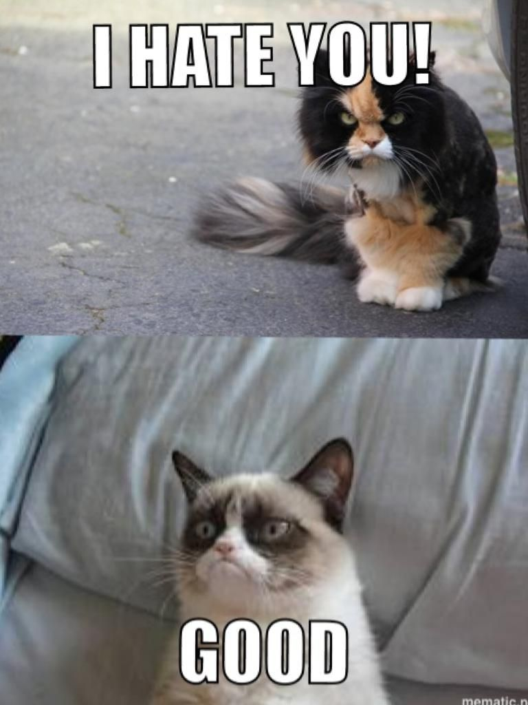 Angry Cat Vs Grumpy Cat Angry Cat Grumpy Cat And Cat - 18 hilarious sad cat problems that might explain why your cats so moody