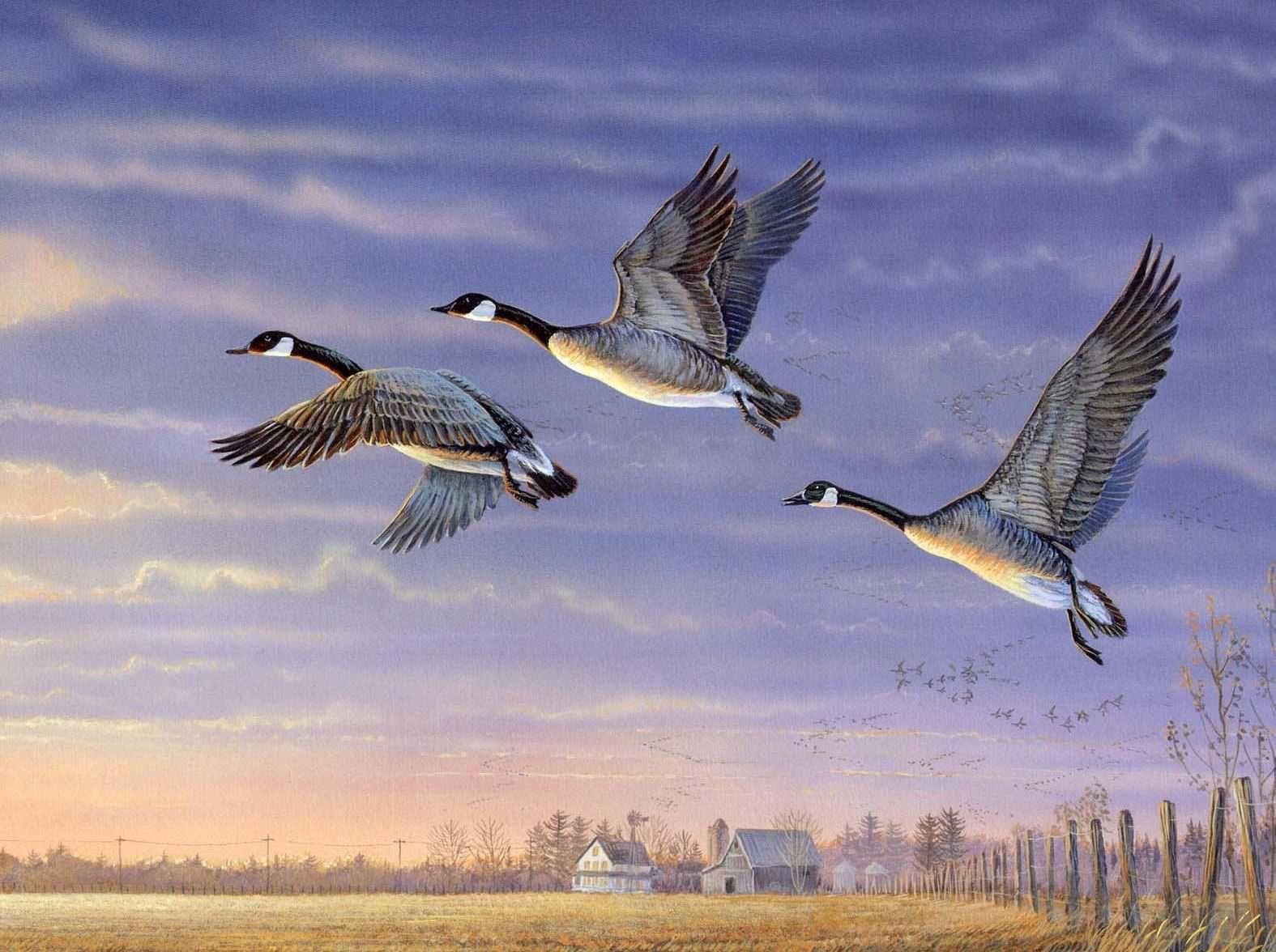 Отлет птиц в картинках