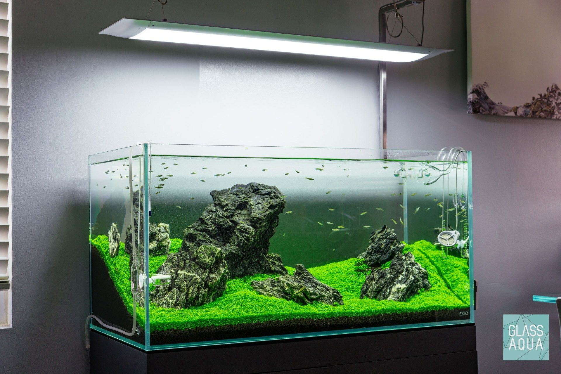 Guide To Planted Aquarium Aquascaping Iwagumi Glass Aqua Planted Aquarium Aquascape Aquascape Aquarium