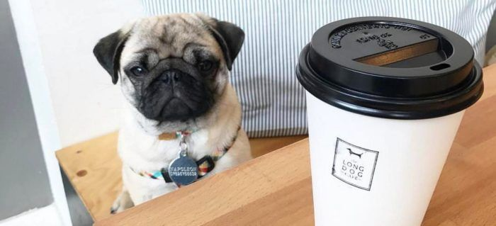 10 Of The Best Dog Friendly Cafes And Coffee Shops Dog Friends