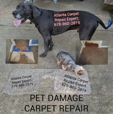 Pin by Atlanta Carpet Repair Expert on Pet Damaged Carpet