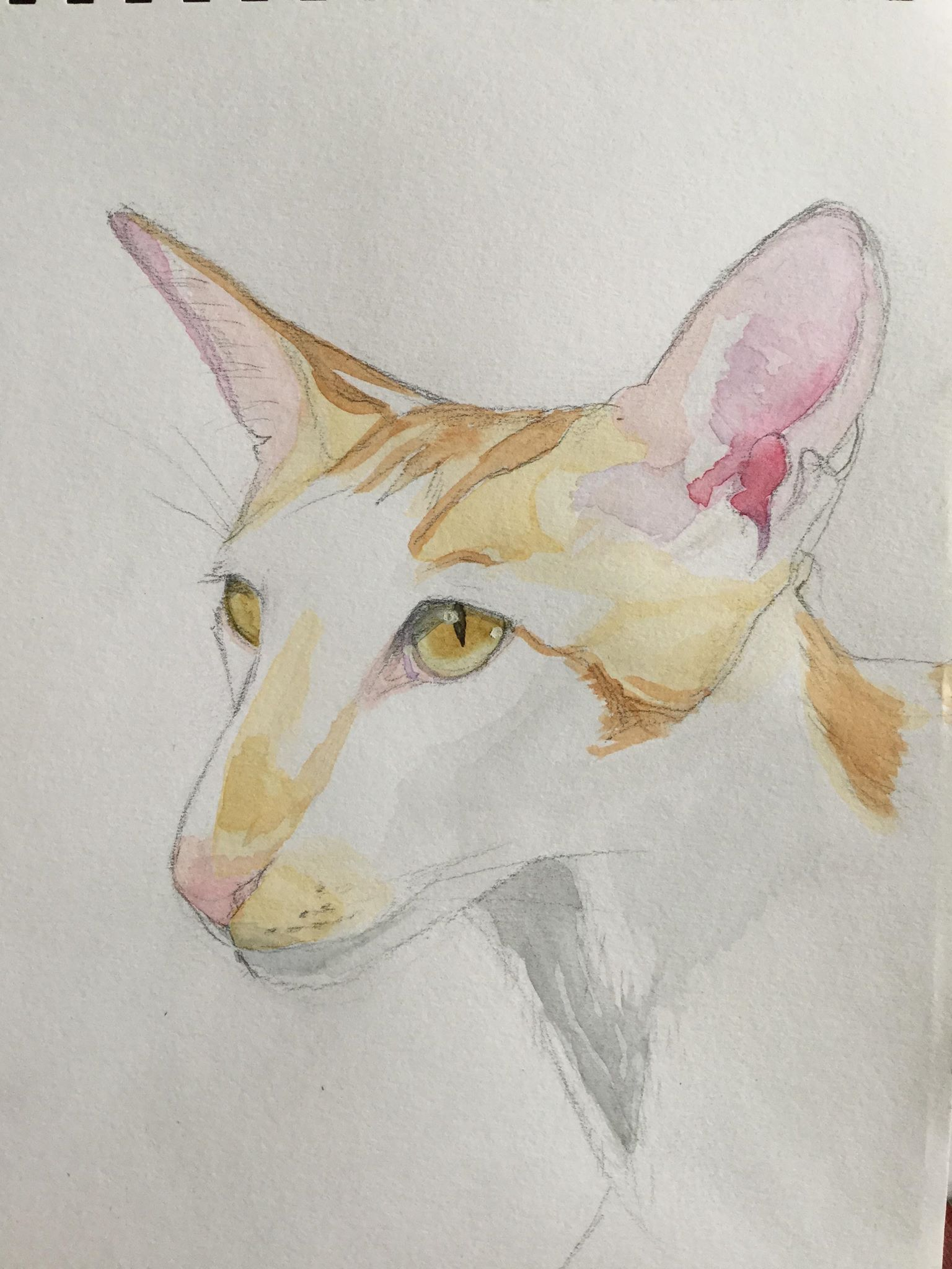 "The Friday Art Cat: Oriental Shorthair ""Renegade""   FRIDAY ART CAT – Oriental Shorthair ""Renegade"" Watercolour and pencil on paper of Renegade of Katzenworld! Sara I am an artist making work mostly of animals and people, specialising in oil painting and soft pastel.  Three cats live with me – Maine Coon Orlando, Bengal Pandora and black moggy Rio.  If you're interested in commissioning me […]   #Cat, #Cats, #Cute, #Funny, #Katze, #Katzen, #Katzenwor"