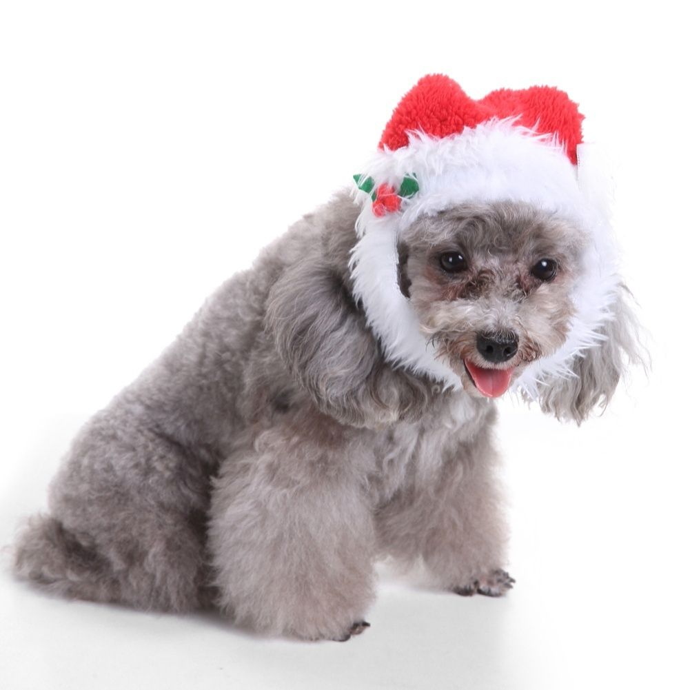 More Than 70 Off Find It On Cheers Shopping App Or Google Play And App Store Santa Dog Christmas Dog Cat Costumes